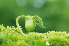 2020庚子年冬至节庆邀约 | 华德福南京小小芽学堂冬至活动